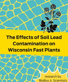 Intern Research: The Effects of Soil Lead Contamination on Wisconsin Fast Plants (Brassica rapa)
