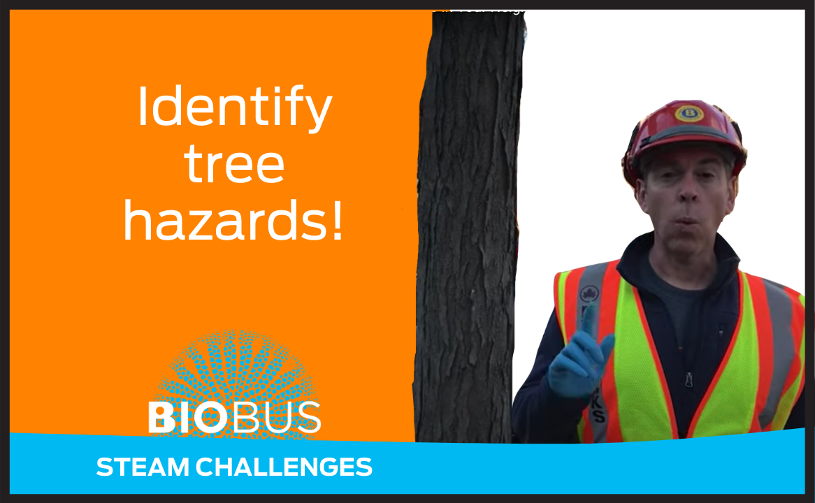 Identify tree hazards!