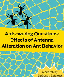Intern Research: Ants-wering Questions: Effects of Antenna Alteration on Ant Behavior