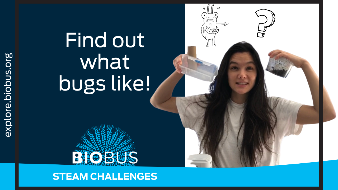 Find out what bugs like!