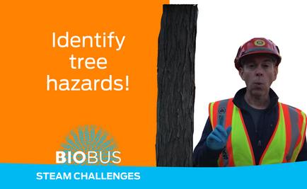 STEAM Challenge: Identify tree hazards!