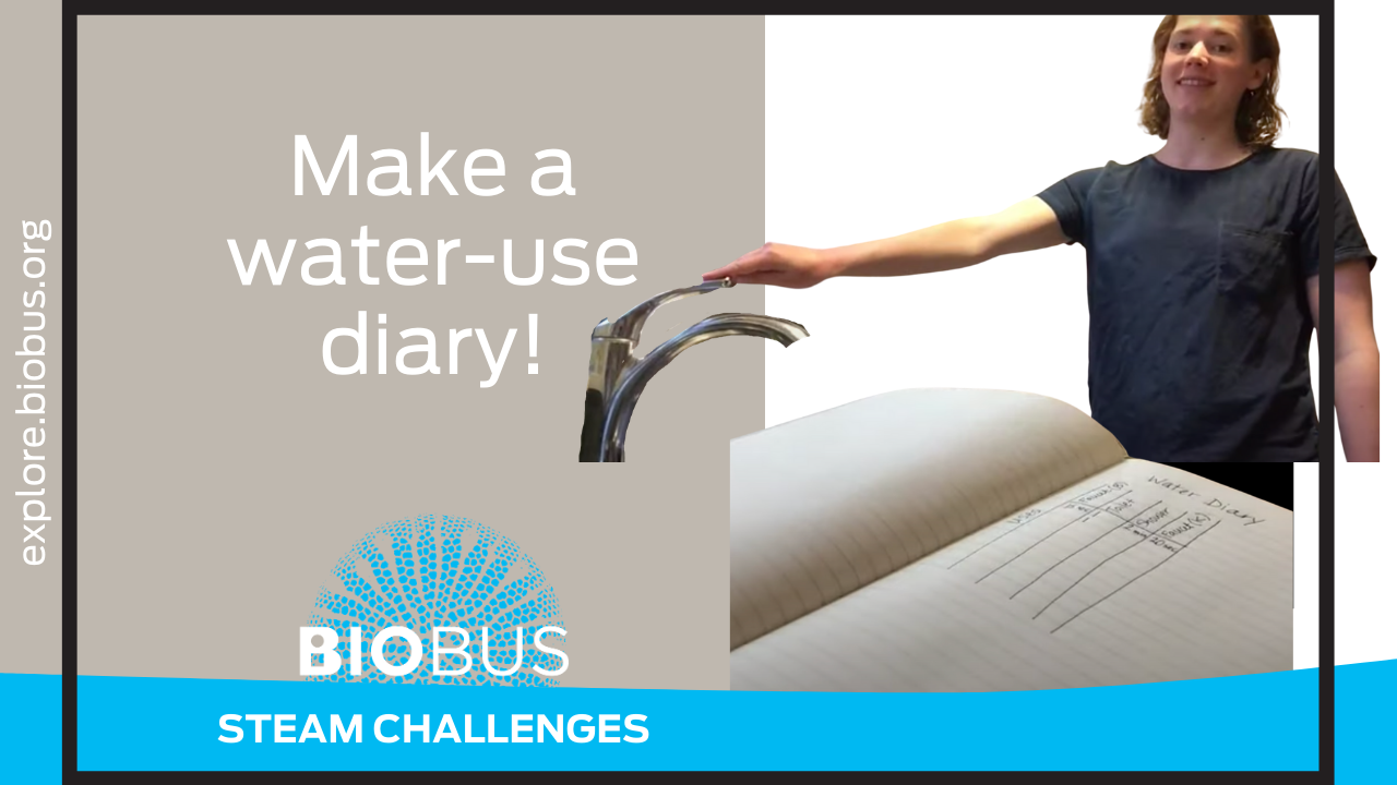 Make a water-use diary!