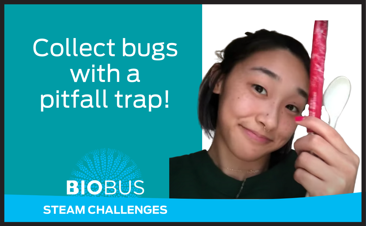 Collect bugs with a pitfall trap!