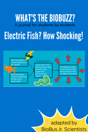 BioBuzz Article: Electric Fish? How shocking!