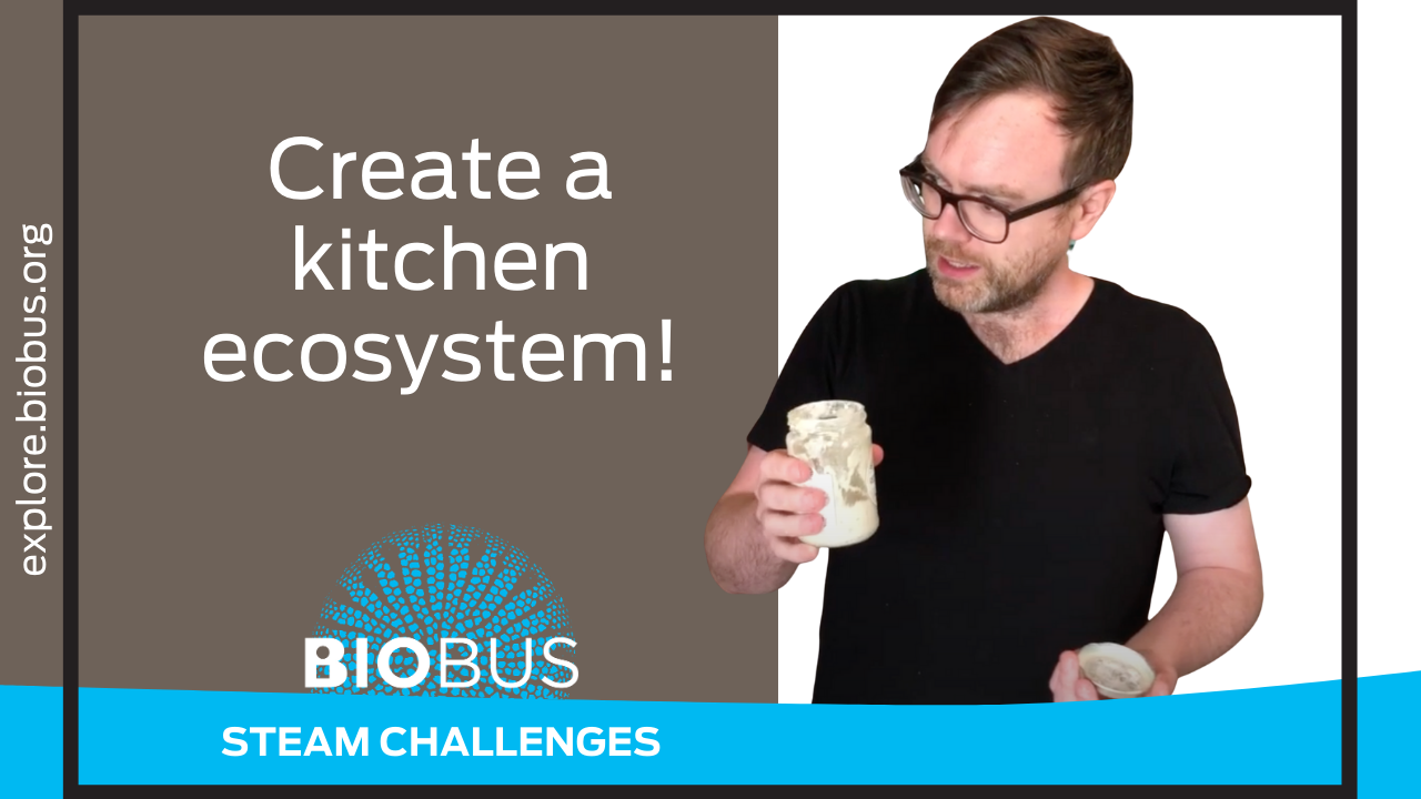 Create a kitchen ecosystem!