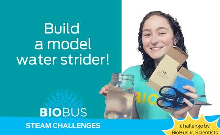 STEAM Challenge: Build a model water strider!