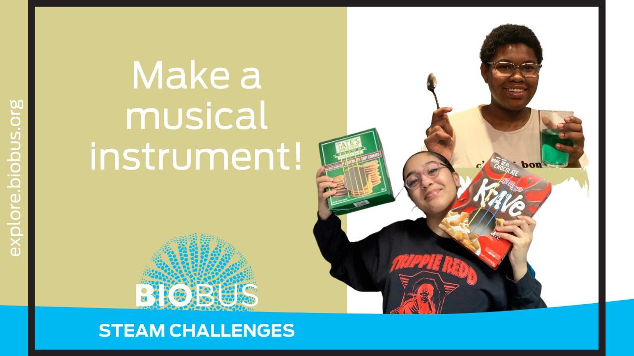 Make a musical instrument!