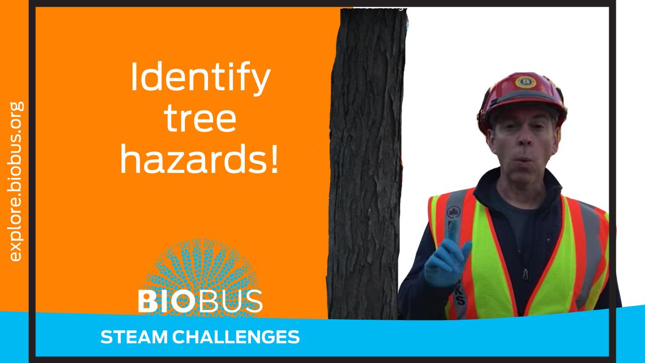 Identify tree hazards!