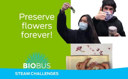 STEAM Challenge: Preserve flowers forever!