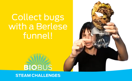 STEAM Challenge: Collect bugs with a Berlese funnel!