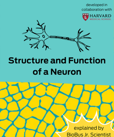 Intern Work: Structure and Function of a Neuron