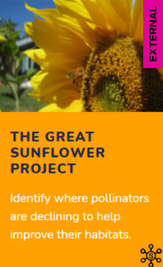 Citizen Science: The Great Sunflower Project