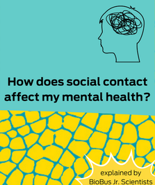 Intern Work: How does social contact affect my mental health?