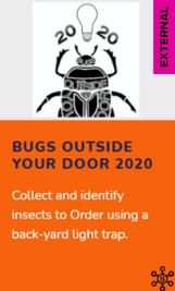Citizen Science: Bugs Outside Your Door 2020