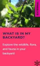 Citizen Science: What Is in My Backyard?