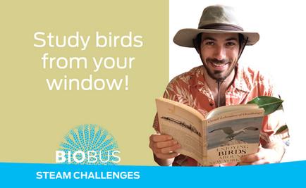 STEAM Challenge: Study birds from your window!
