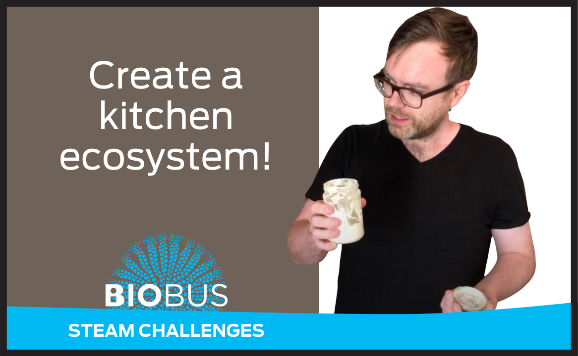 Create a kitchen ecosystem!