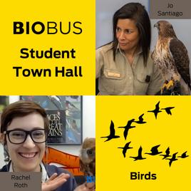 Student Town Hall: Birds