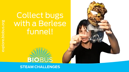 Collect bugs with a Berlese funnel!