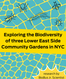 Intern Research: Exploring the Biodiversity of three Lower East Side Community Gardens in NYC