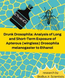 Intern Research: Drunk Drosophila: Analysis of Long and Short-Term Exposure of Apterous (wingless) Drosophila Melanogaster to Ethanol