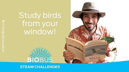 Study birds from your window!