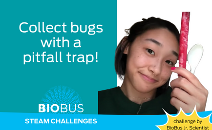 STEAM Challenge: Collect bugs with a pitfall trap!