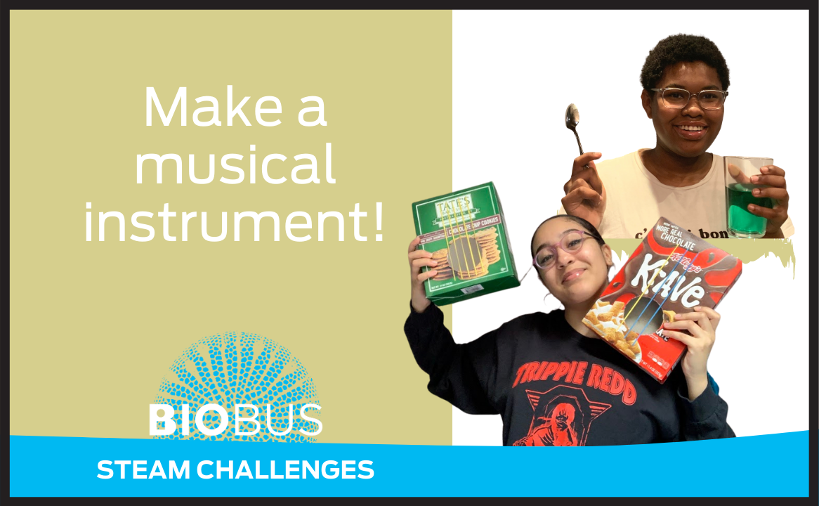 Make a musical instrument!