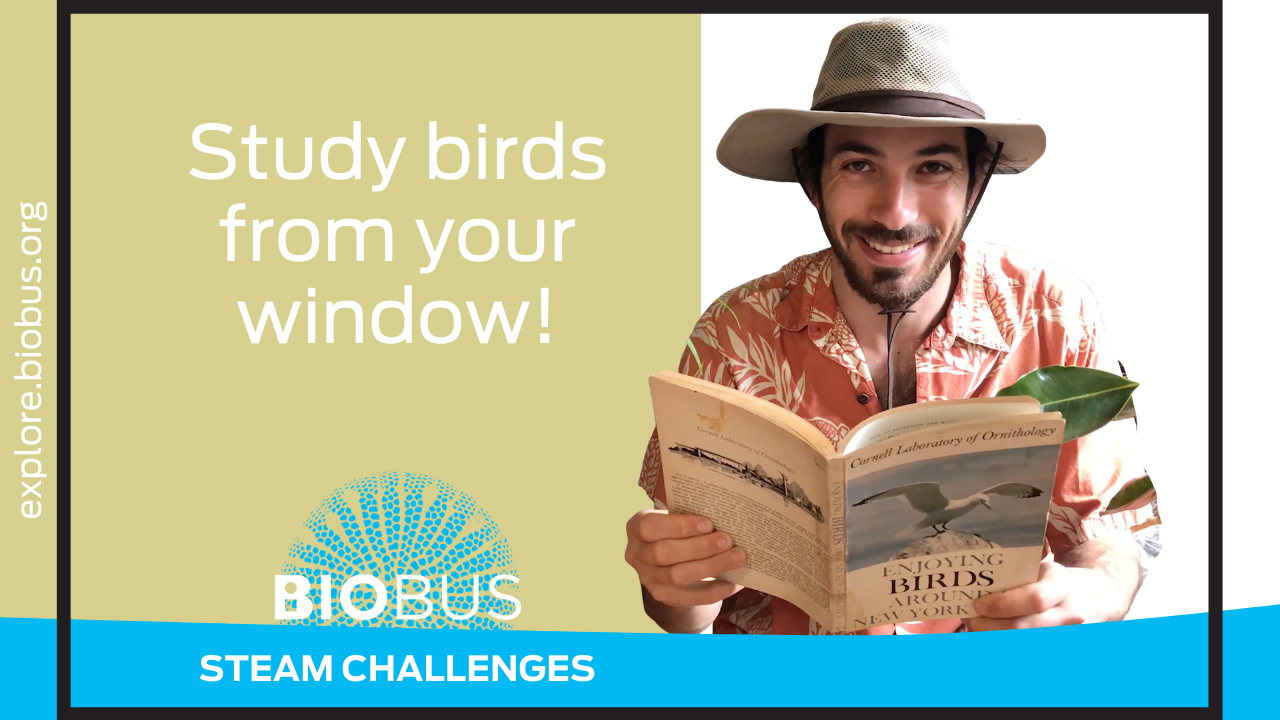 Study birds from your window!