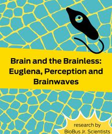 Intern Research: Brain and the Brainless: Euglena, Perception and Brainwaves