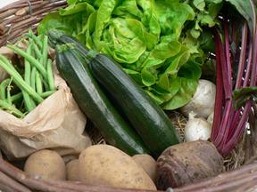 Panier de légumes bio des jardins solidaires de kerbellec