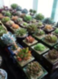 다육식물3