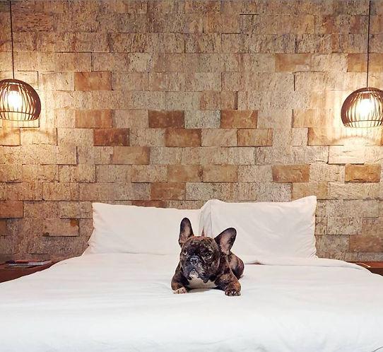 Joaquim Frenchie na cama dos Chalé luxo.