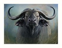 Buffalo cape by KariLou