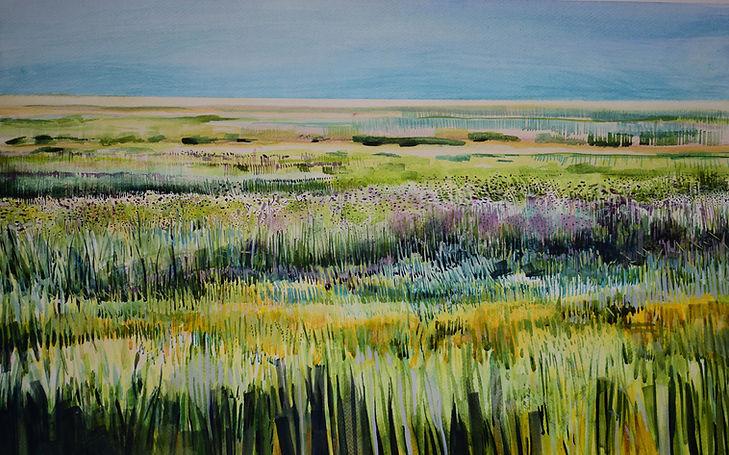 Cley Marsh, Norfolk(7)