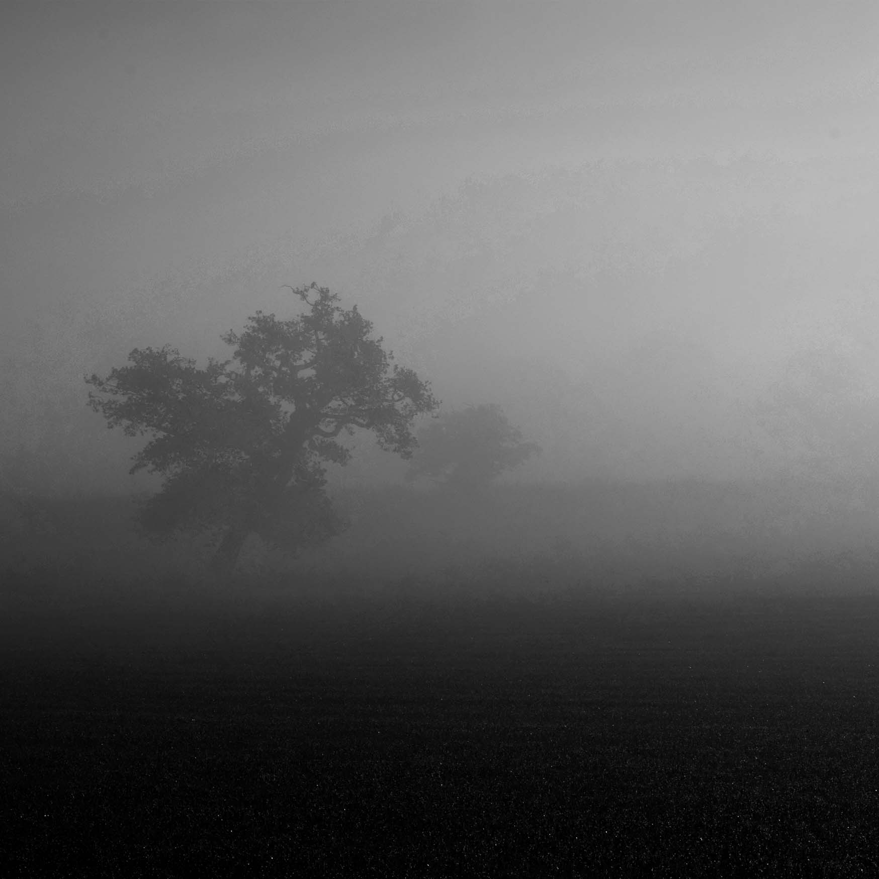 W1 Autumn Mist
