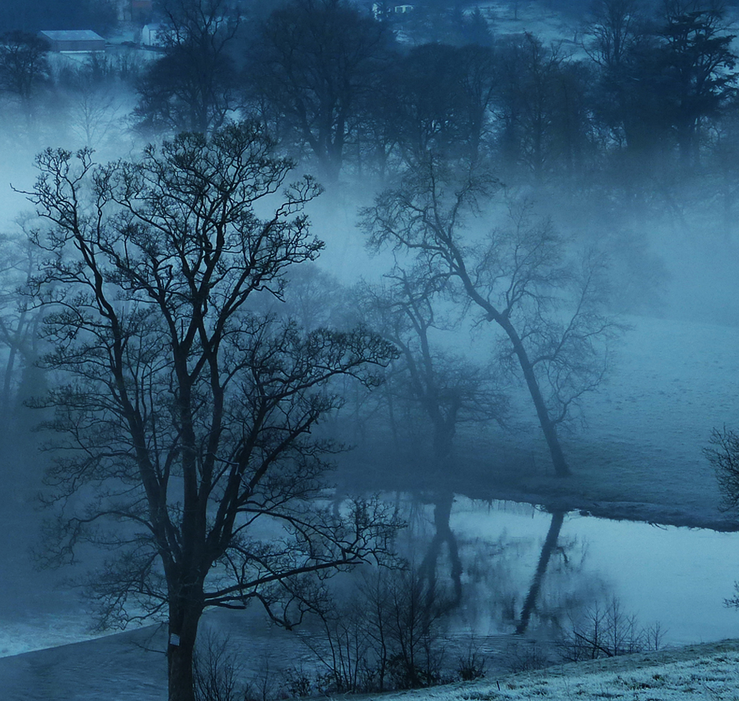 W6 Misty Trees, Llangollen