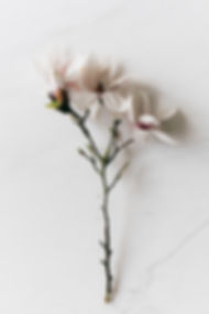 white-flowers-on-white-surface-4210811.j