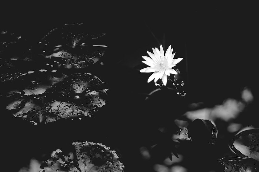 water-lily-1015215_1280.jpg