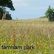 farnham park image.jpg