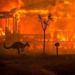 Australian fire.jpg