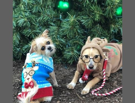 """WINNER ANNOUNCED IN """"YOUR DOG'S UGLY CHRISTMAS SWEATER CONTEST!"""""""