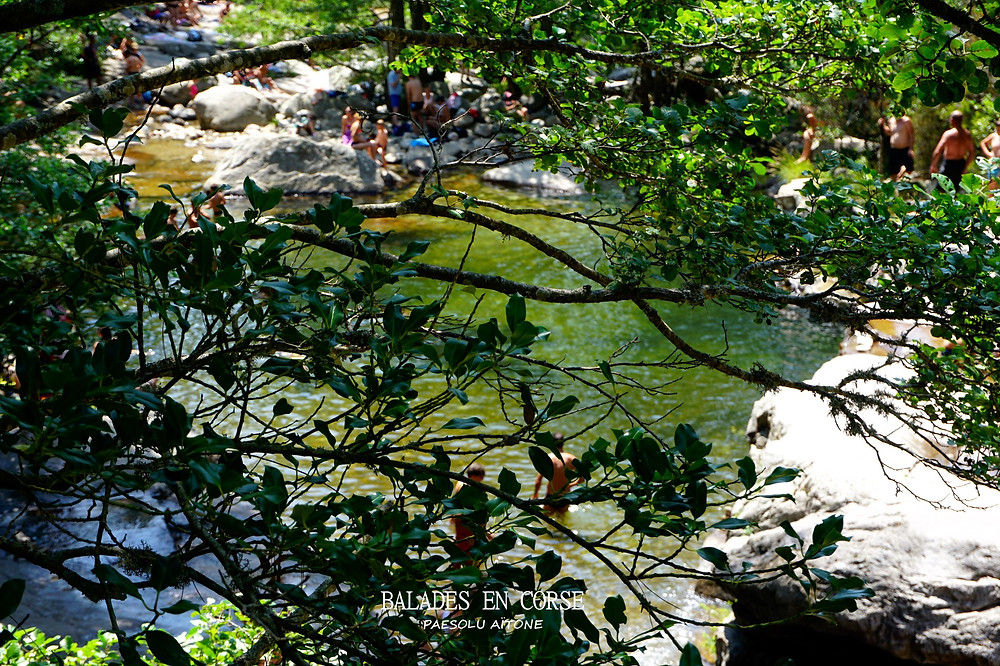 Piscines naturelles forêt Evisa