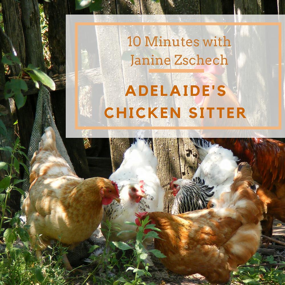 Adelaide's Chicken Sitter: Janine Zschech