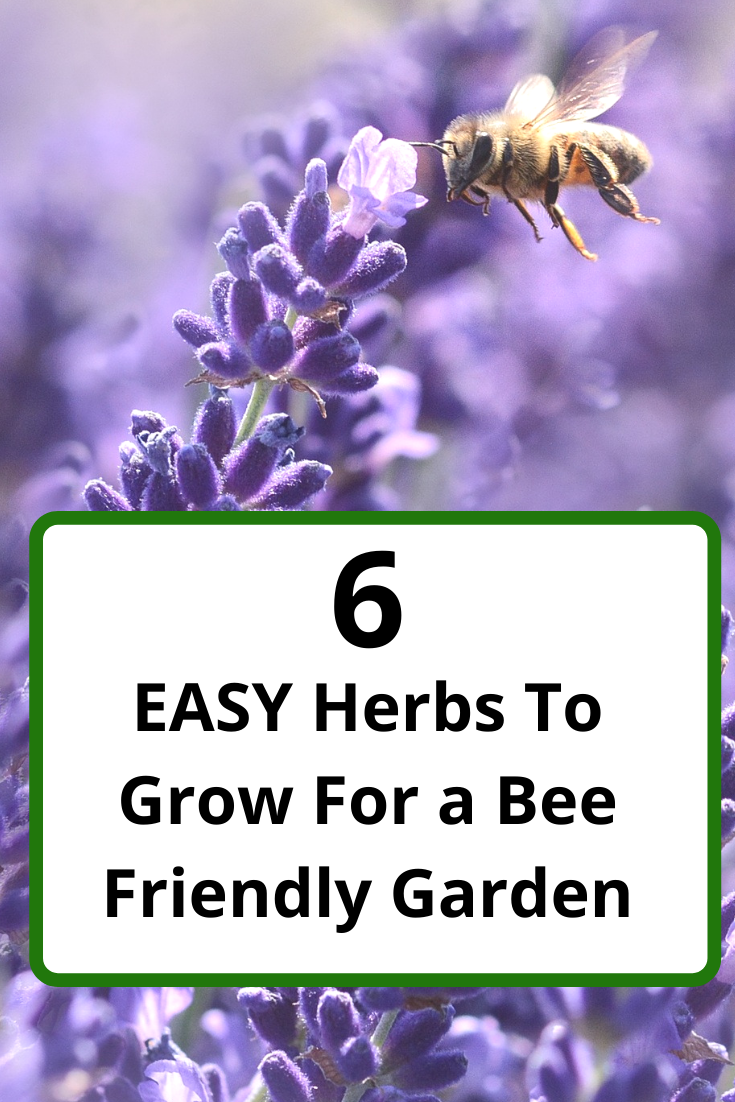6 Easy Herbs To Grow for a Bee Friendly Garden