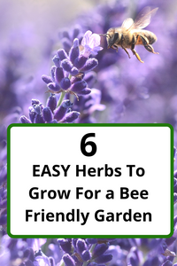 6 Easy Herbs To Grow for a Bee Friendly Garden