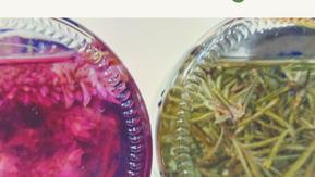 DIY Herbal Hair Rinse - Lavender & Rosemary