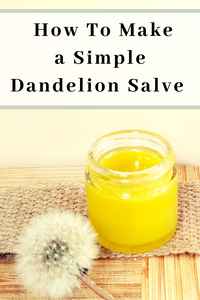 How To Make a Simple Dandelion Salve