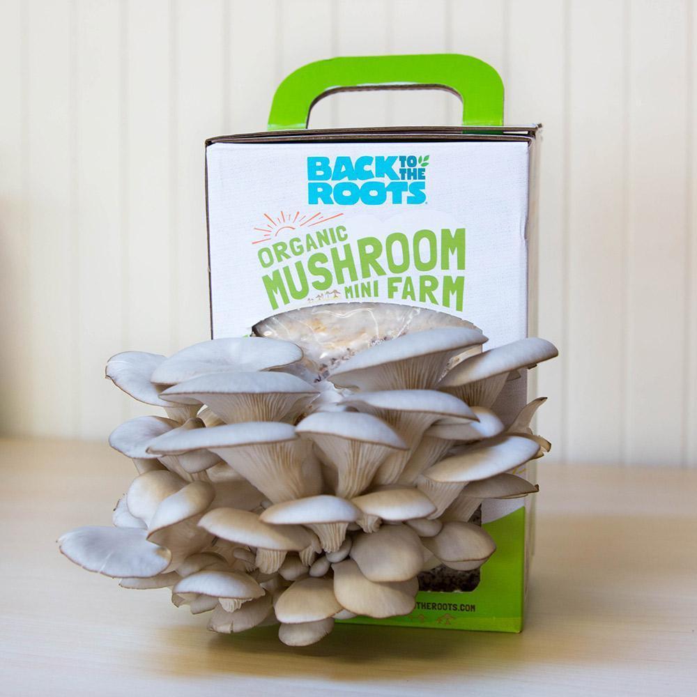 Organic Mushroom Farm - perfect gift for climate change deniers