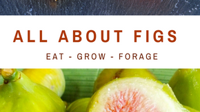 Figs: Eat Grow Forage